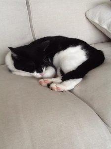 johnny on the sofa